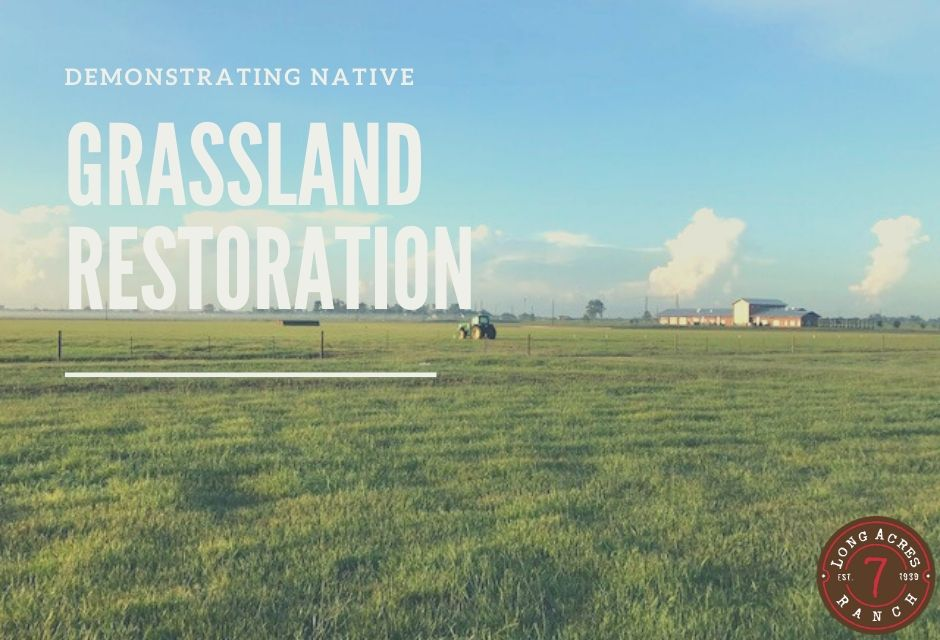 Demonstrating Native Grassland Restoration