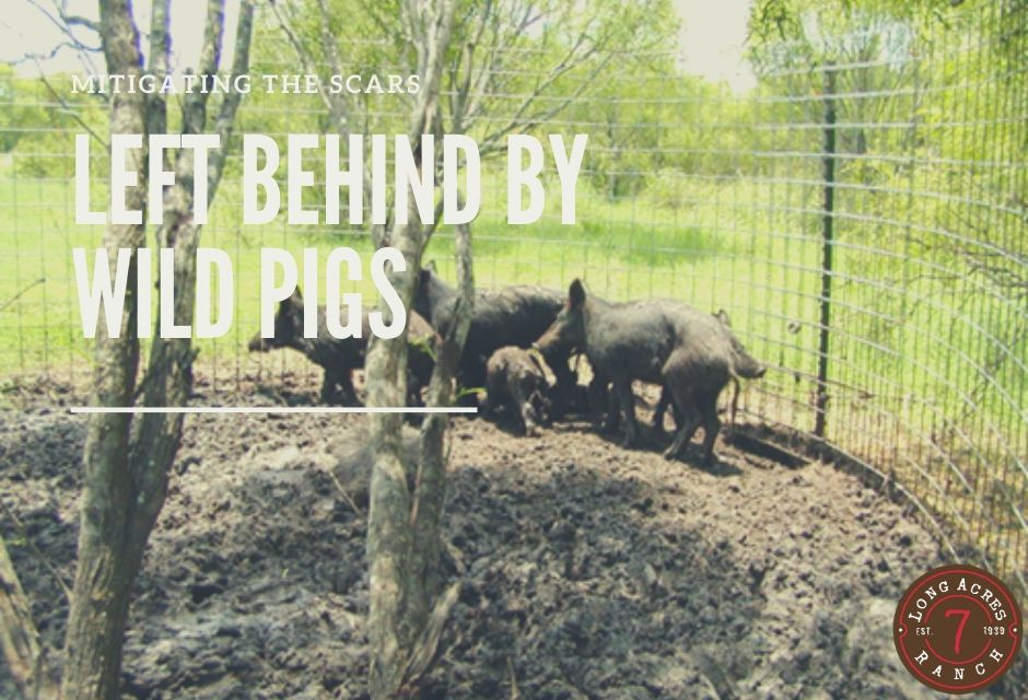 Mitigating the Scars Left Behind by Wild Pigs