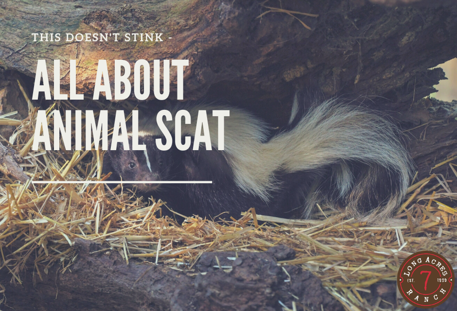 This Doesn't Stink – Animal Scat