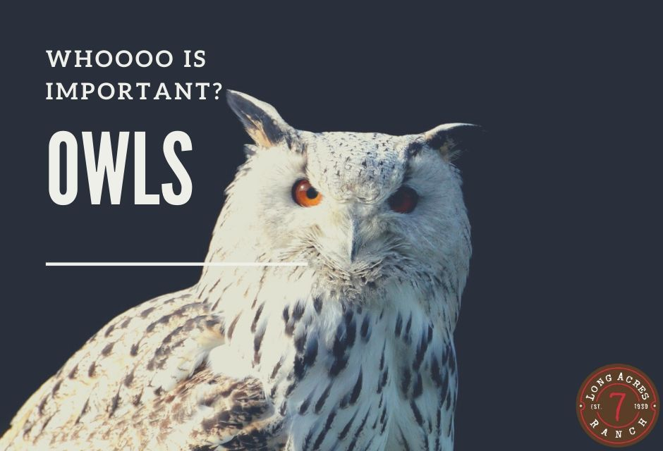 WHOOOO is important?  Owls!