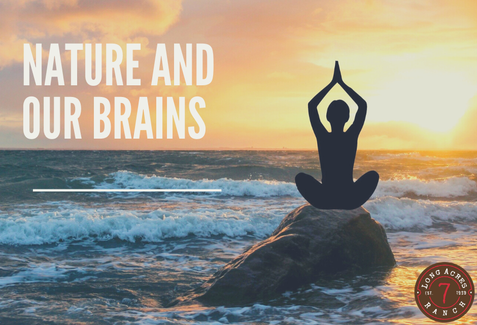 Nature and Our Brains