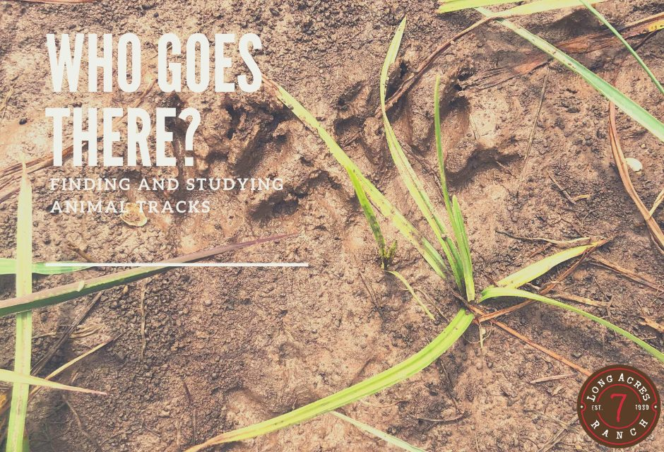 Who Goes There? Finding and Studying Animal Tracks