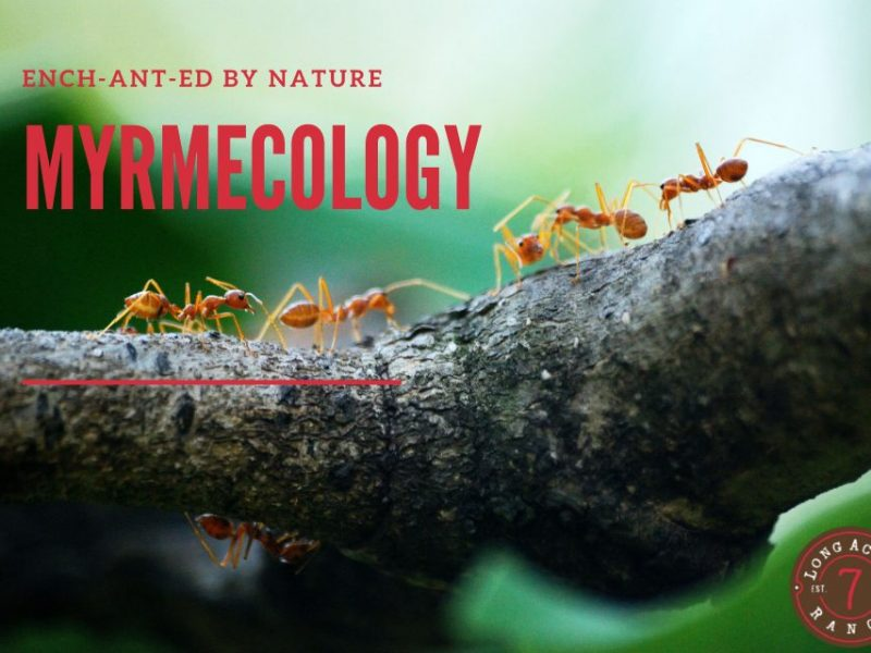 Myrmecology: EnchANTed by Nature